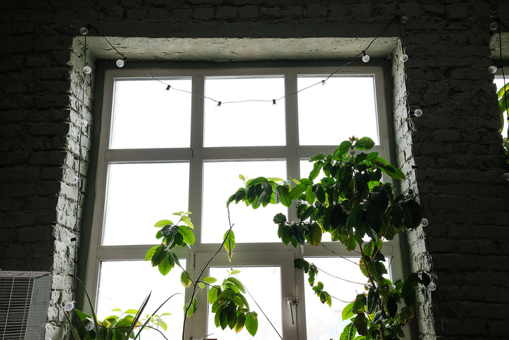 On the windowsill, against the background of a glass window, there is a green houseplant in a flower pot. Stylish modern unusual interior of a loft space or non-residential premises or a workshop with hanging lamps. The concept of home gardening, hobby.